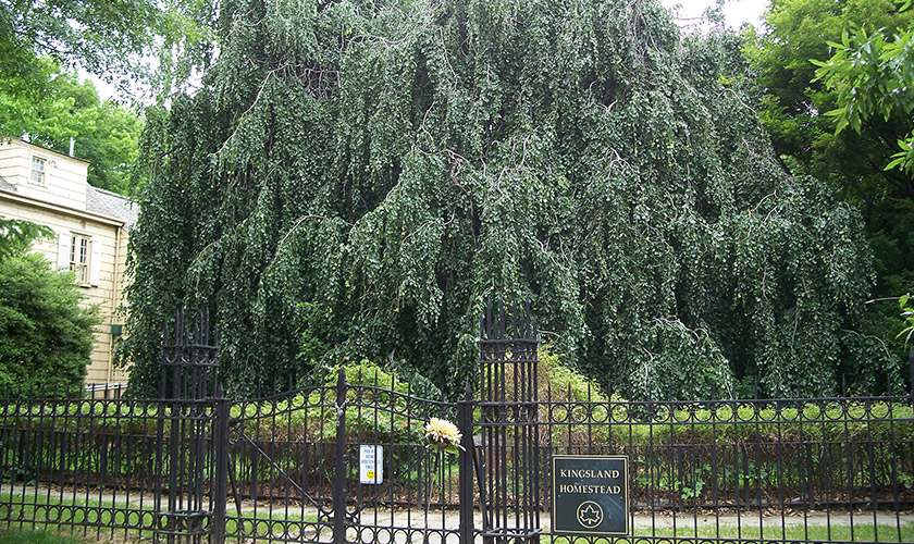 Weeping Beech Park